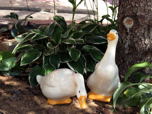 ceramic ducks